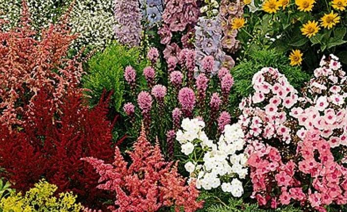 Καλλιεργήστε ποώδη πολυετή φυτά και λουλούδια από σπόρο