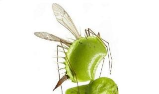 Απαλλάξτε τον κήπο σας από τα κουνούπια με αντικουνουπικά φυτά