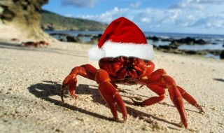Κάντε Χριστούγεννα στο Νησί των Χριστουγέννων!
