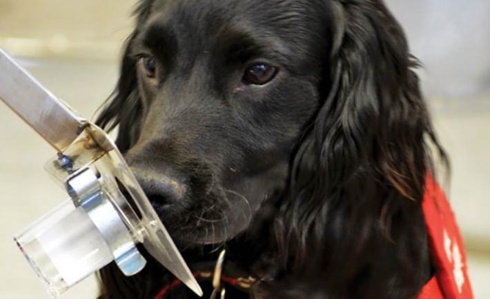 Τα σκυλιά μπορούν να διαγνώσουν τον καρκίνο