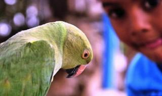 Γιατί οι παπαγάλοι μπορούν να μιλάνε;