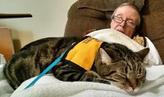 Ολιστικοί θεραπευτές οι γάτες για τις καρδιακές παθήσεις