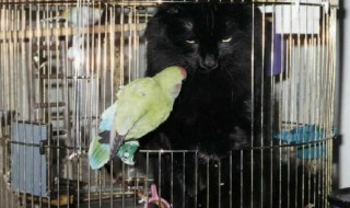 Οι δέκα κίνδυνοι για τα κατοικίδια πτηνά