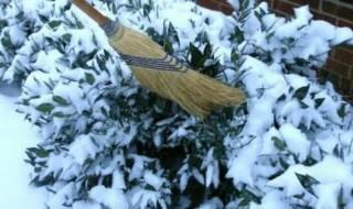 Ζημιές από το χιόνι και την παγωνιά