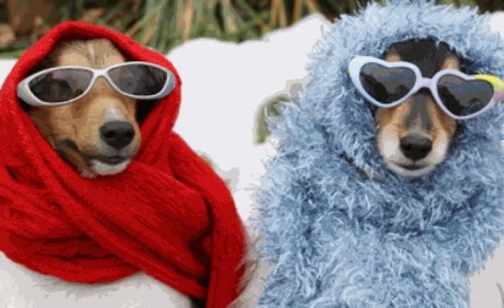 Προστατέψτε το κατοικίδιό σας από τον κρύο χειμώνα