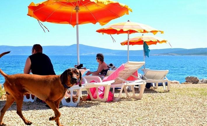 Συμβουλές για τα σκυλιά στην παραλία και τη θάλασσα