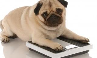 Μήπως ο σκύλος σου πάχυνε λιγάκι; Να το προσέξεις!