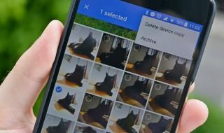 Google Photos: Η εφαρμογή που αναγνωρίζει πλέον και τα κατοικίδια σας!