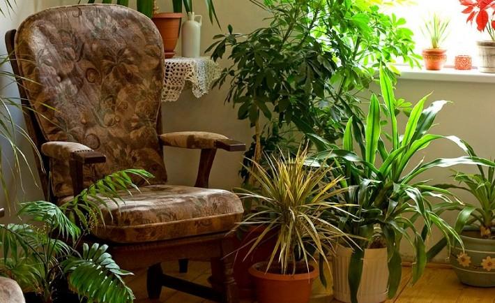 Χειμωνιάζει; Μεταφέρετε τα φυτά σας. Από το μπαλκόνι στο σαλόνι
