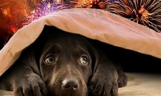 Κατοικίδια και πυροτεχνήματα: Πώς να προστατεύσετε σκύλους, γάτες και μικρότερα ζώα