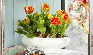 Πώς να καλλιεργήσετε τουλίπες σε εσωτερικό χώρο