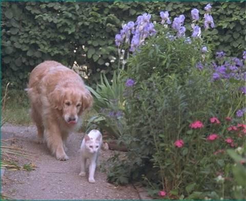 garden-pets1
