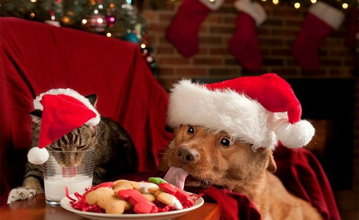 Πώς να προστατέψετε τα κατοικίδιά σας από τους κινδύνους των Χριστουγέννων