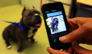 Νέα εφαρμογή μπορεί να αναγνωρίσει το σκυλί σας από το ρινικό του αποτύπωμα