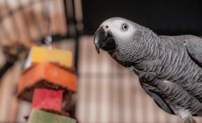 Για να νιώσει ο παπαγάλος καλά…