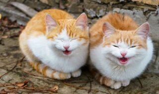 Μιλούν οι γάτες; Φυσικά!